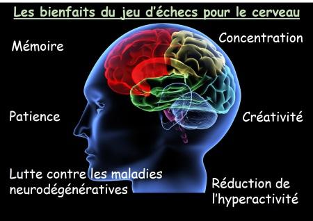 echecs et cerveau